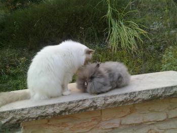 Nutella et César...le grand amour !!!
